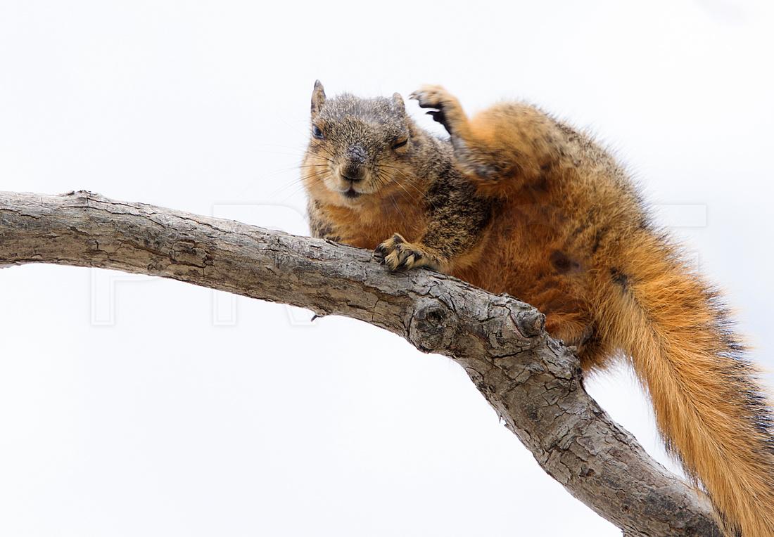 Waving At a Nut